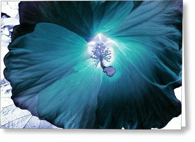 Inversion Digital Art Greeting Cards - Hibiscus Inversion  Greeting Card by Shawna  Rowe
