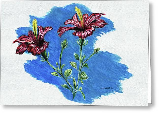 Pencil Greeting Cards - Hibiscus Greeting Card by Peter Piatt