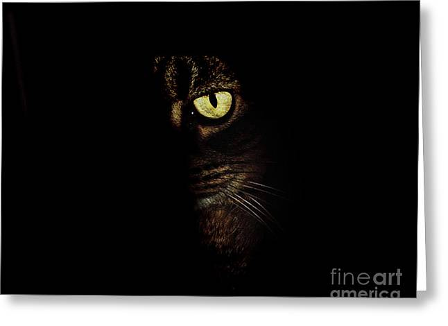 Hiding Greeting Cards - Hidden Kitty Under The Cover Of Darkness Greeting Card by Andee Design