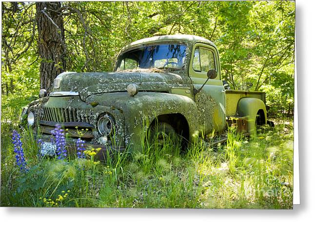 Hiding Greeting Card by Idaho Scenic Images Linda Lantzy