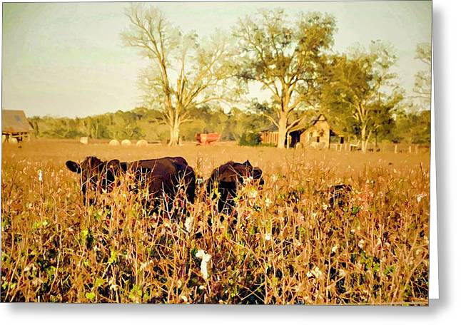 Georgia Cotton Fields Greeting Cards - Hiding In The Cotton Greeting Card by Jan Amiss Photography