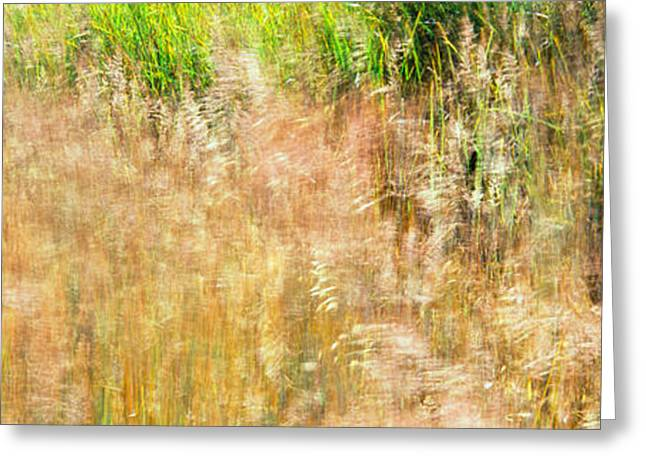 High Angle View Of Grass In Field Greeting Card by Panoramic Images
