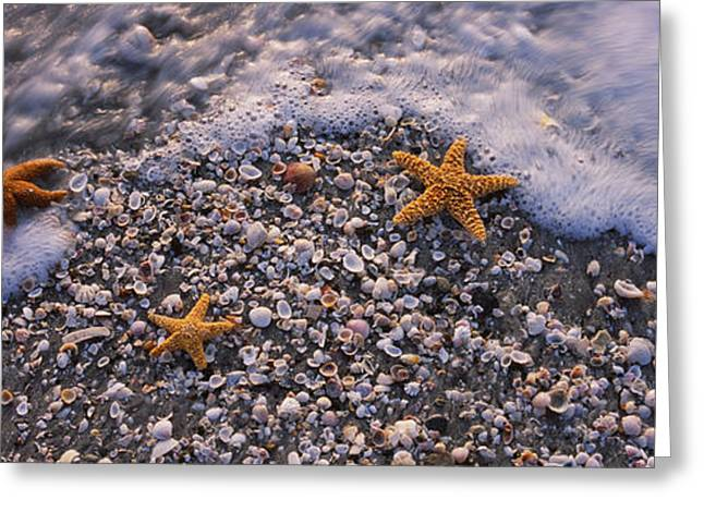 Sea Animals Greeting Cards - High Angle View Of Three Starfish Greeting Card by Panoramic Images