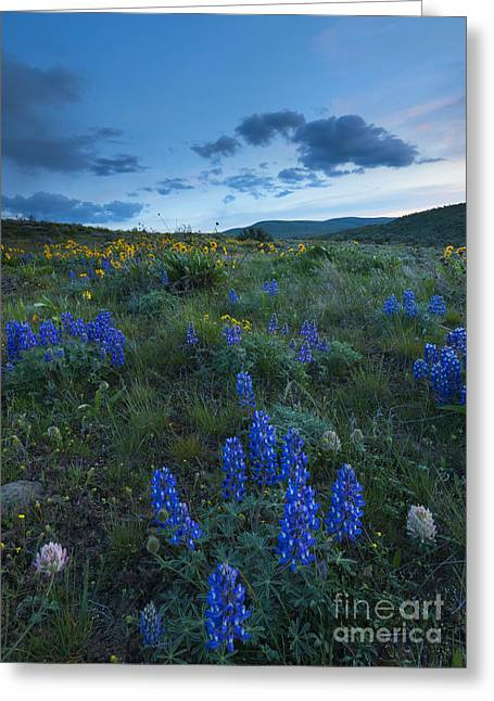 High Desert Dusk Greeting Card by Mike Dawson