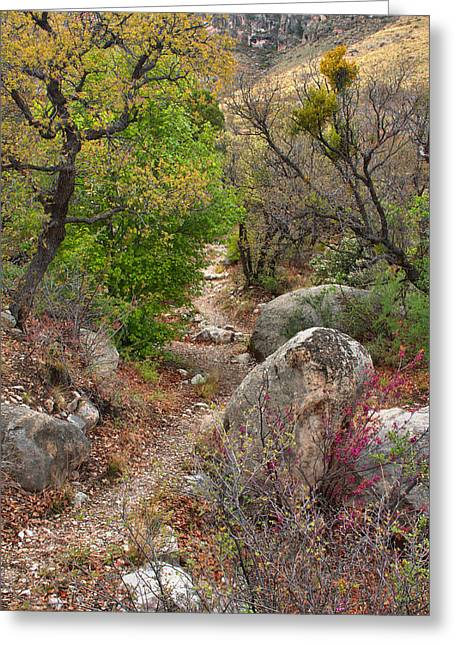 Guadalupe Greeting Cards - High Desert Spring 2 Greeting Card by Stephen  Vecchiotti
