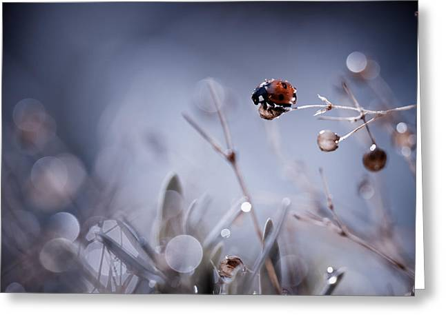 Ladybugs Greeting Cards - High Diving Greeting Card by Fabien Bravin