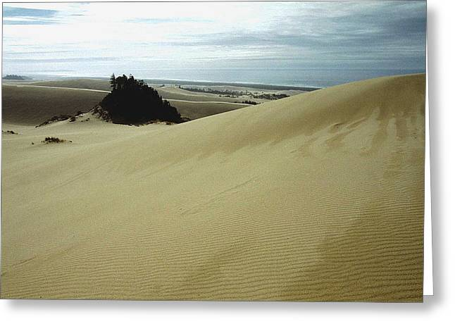 Oregon Dunes National Recreation Area Greeting Cards - High Dunes 1 Greeting Card by Eike Kistenmacher