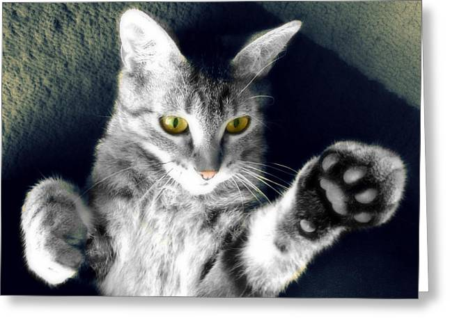 Cat On Back Greeting Cards - High Five Kitty Greeting Card by Kathy Krause