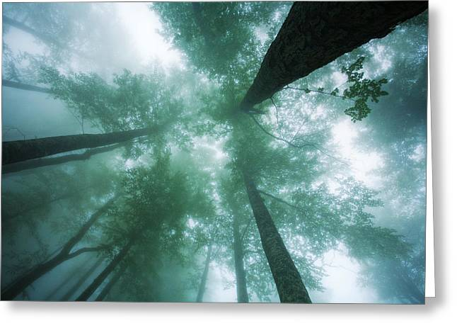 Fog Mist Greeting Cards - High In the Mist Greeting Card by Evgeni Dinev