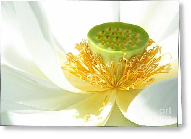 Lotus Seed Pod Greeting Cards - High Key Lotus Greeting Card by Sabrina L Ryan
