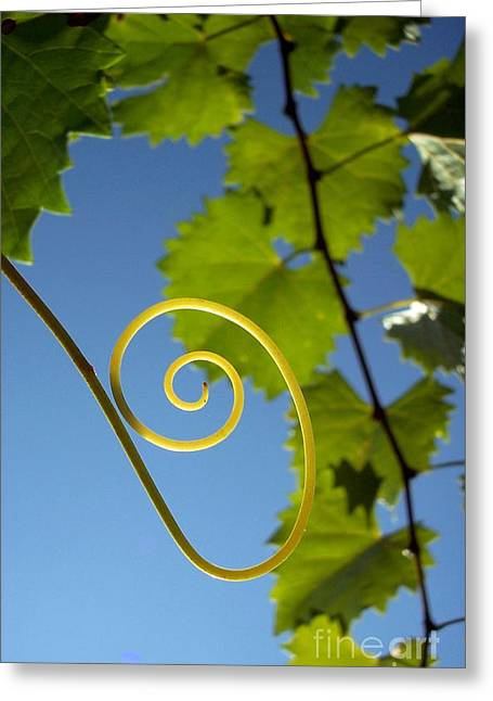 Grape Vines Greeting Cards - High Note Greeting Card by Sally Siko
