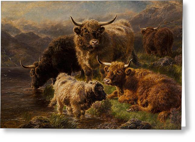 Highland Cattle Greeting Card by William Watson