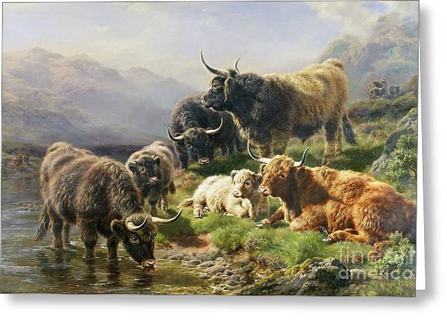 Hillsides Greeting Cards - Highland Cattle Greeting Card by William Watson