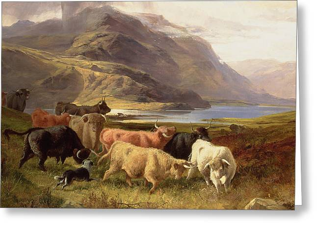 Highland Cattle With A Collie Greeting Card by Joseph Adam