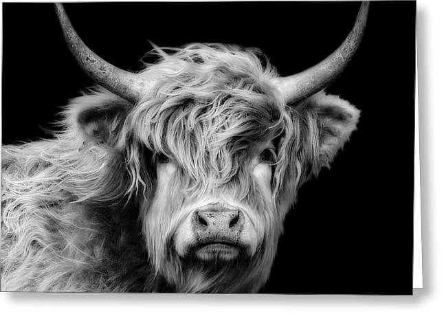 Country Woolies Greeting Cards - Highland Coo Greeting Card by Linsey Williams