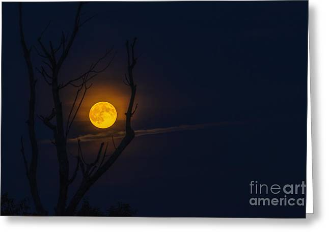 Cut-outs Greeting Cards - Highland Moon  Greeting Card by Thomas R Fletcher