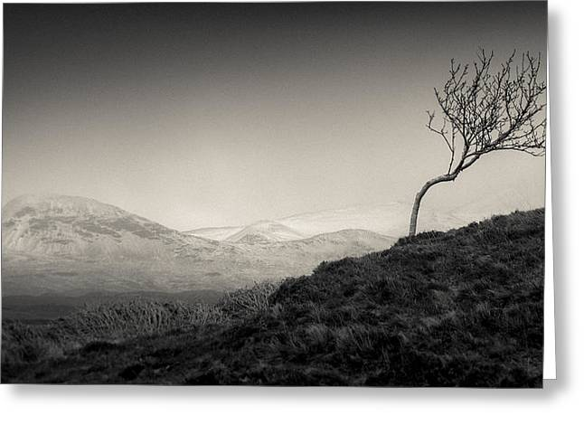 Beautiful Scenery Greeting Cards - Highland Tree Greeting Card by Dave Bowman