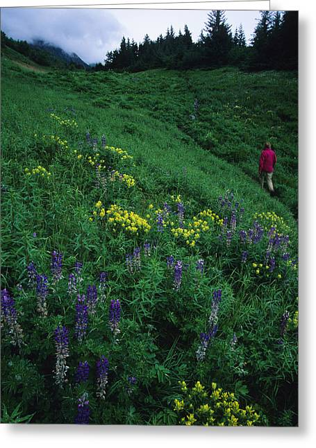 Mid Adult Women Greeting Cards - Hiking In The Coastal Hills Near Homer Greeting Card by Bill Hatcher
