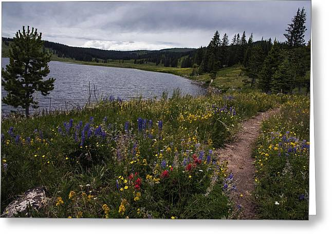 Lake Walden Greeting Cards - Hiking Trail near Dumont Lake Colorado Greeting Card by Dave Dilli