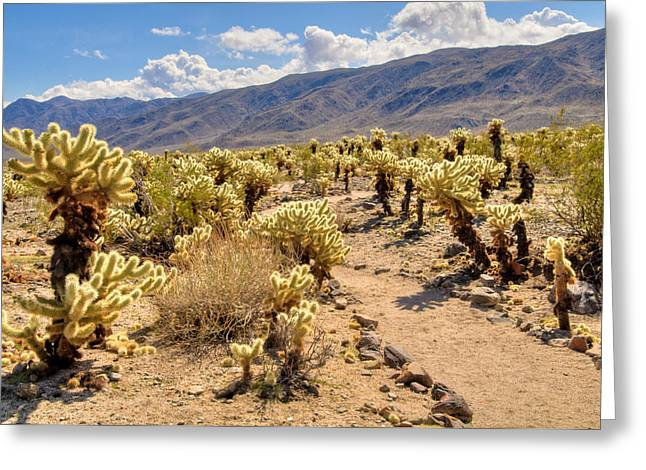 Thorny Desert Plant Greeting Cards - Hiking Trail Through Chollo Garden Greeting Card by Connie Cooper-Edwards