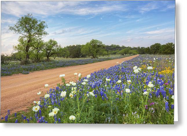 Wildflower Photos Greeting Cards - Hill Country Bluebonnets on a County Road 1 Greeting Card by Rob Greebon