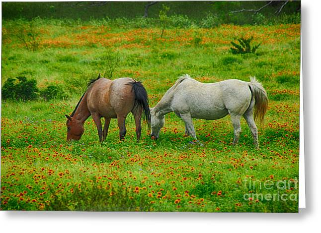 People Greeting Cards - Hill Country Horses in Spring Greeting Card by Toma Caul