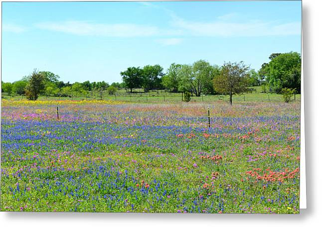 Stockton Greeting Cards - Hill Country Pastel Panorama Greeting Card by Lynn Bauer