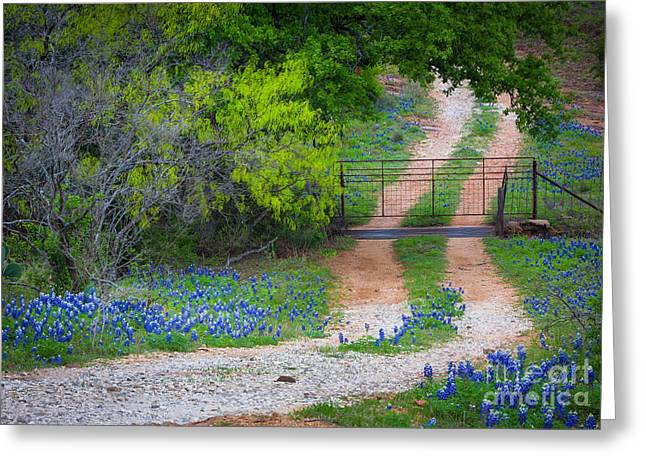 Rut Greeting Cards - Hill Country Road Greeting Card by Inge Johnsson