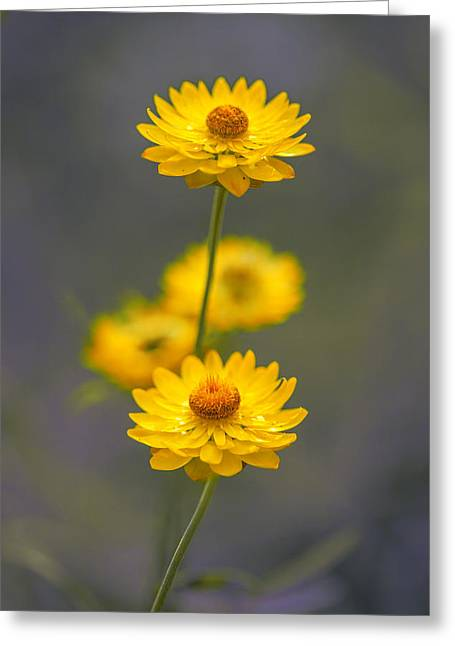 Hillflowers Greeting Card by Az Jackson