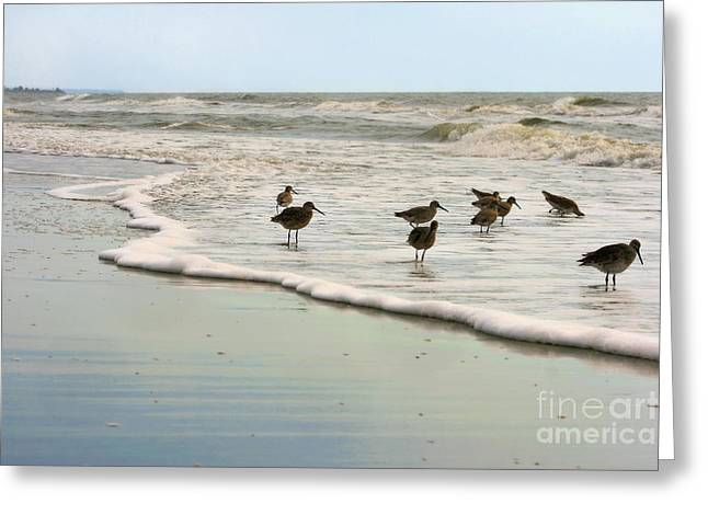 Plundering Plover Series 6 Greeting Card by Angela Rath