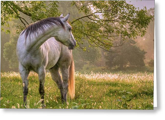 Horse Photographs Greeting Cards - Hindsight Greeting Card by Ron  McGinnis