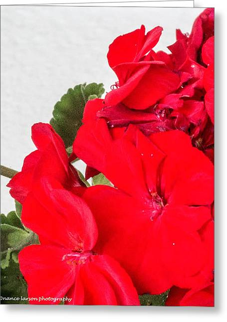 Red Geraniums Greeting Cards - Hint of Red Greeting Card by Nance Larson
