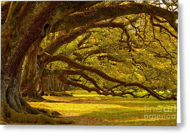 Slavery Greeting Cards - Historic Oak Canopy Greeting Card by Adam Jewell