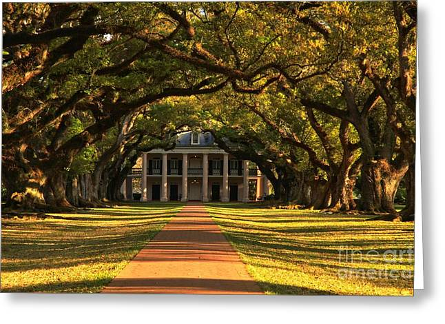 Slavery Greeting Cards - Historic Oak Pathway Greeting Card by Adam Jewell