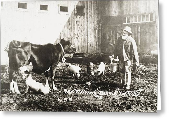 Utter Greeting Cards - Historic Photograph Of Piglet Nursing Greeting Card by Remsberg Inc