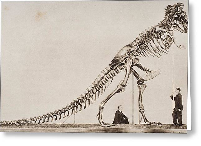 Historical Images Drawings Greeting Cards - Historical Illustration Of Dinosaur Greeting Card by Ken Welsh