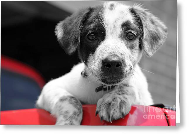 Puppies Digital Greeting Cards - Hmmm Greeting Card by Amanda Barcon