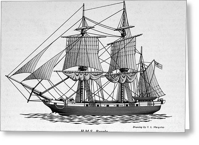 Darwin Greeting Cards - H.m.s. Beagle Greeting Card by Science Source