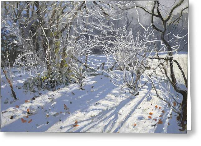 Hoar Frost Greeting Card by Andrew Macara