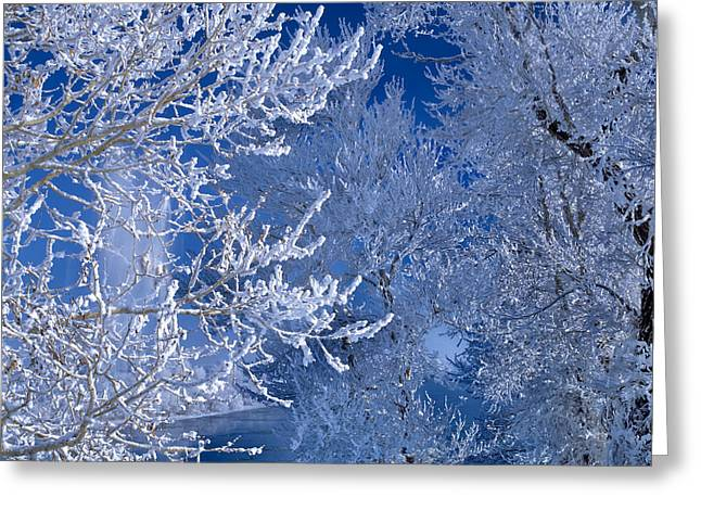 Idaho Photographs Greeting Cards - Hoarfrost Greeting Card by Leland D Howard