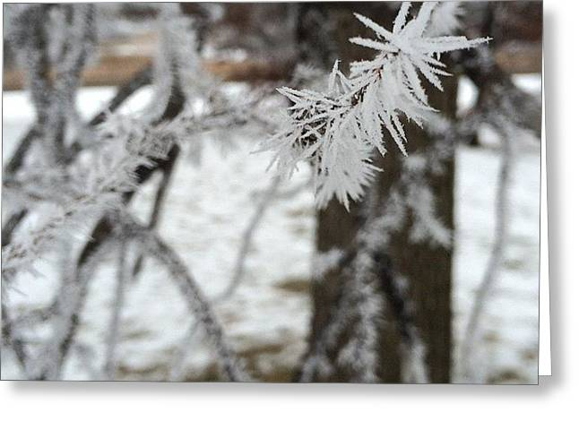 Winter Storm Greeting Cards - Hoarfrost Storm Greeting Card by Katie Theien