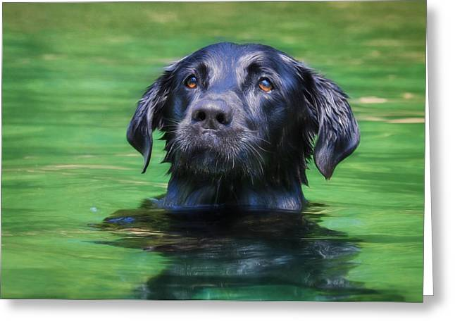 Swimming Dog Greeting Cards - Hobie 1 Greeting Card by Lori Deiter