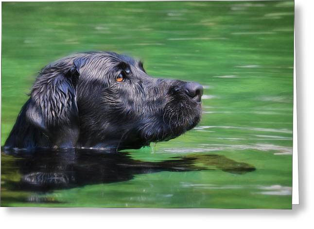 Swimming Dog Greeting Cards - Hobie 2 Greeting Card by Lori Deiter