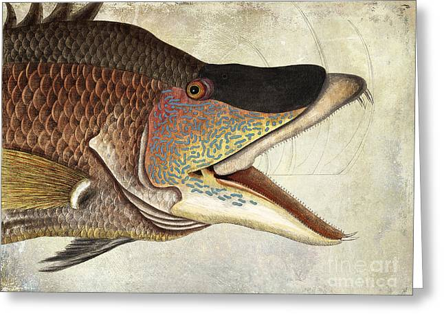 Snapper Greeting Cards - Hogfish Snapper Greeting Card by Jon Neidert