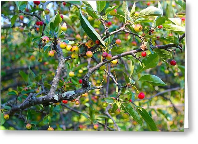 Hokies Greeting Cards - Hokie Berries Greeting Card by Katlyn Frye