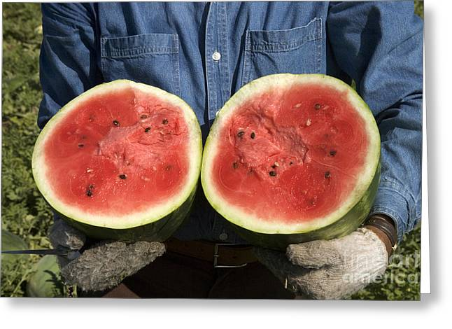Holding A Halved Watermelon Greeting Card by Inga Spence