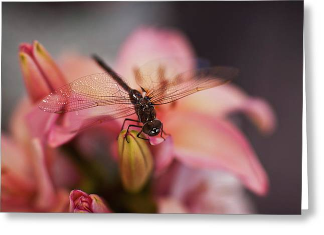 Holding On Greeting Card by Mike Reid