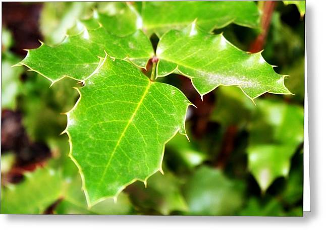 Portland Photography Greeting Cards - Holly Leaves Greeting Card by Cathie Tyler