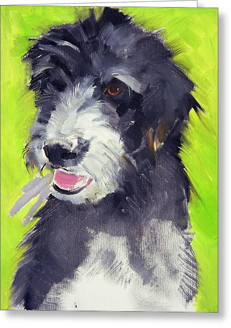 Shaggy Greeting Cards - Holly Greeting Card by Sally Muir