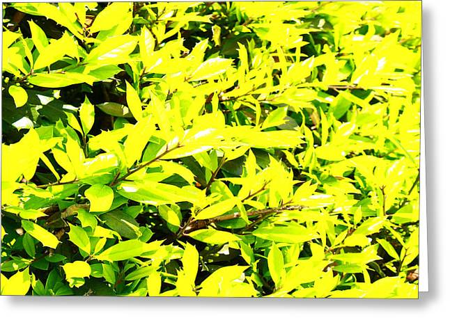 Purchase Greeting Cards - Holly Sunshine Leaves Greeting Card by Linda Ritlinger